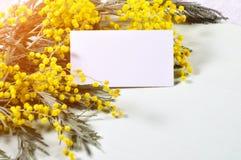 Carte postale de ressort - la mimosa blanche de carte et de ressort fleurit Photos libres de droits