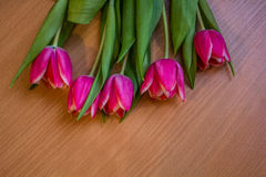 Carte postale des tulipes Photo libre de droits