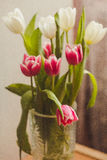 Carte postale des tulipes Image stock