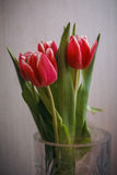 Carte postale des tulipes Photographie stock