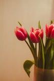 Carte postale des tulipes Photographie stock libre de droits