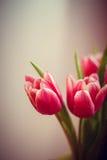 Carte postale des tulipes Photo libre de droits