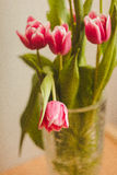 Carte postale des tulipes Image stock