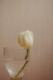 Carte postale des tulipes Image libre de droits