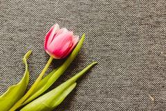 Carte postale des tulipes Photo stock