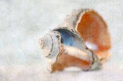 Carte postale grunge de cru avec l'escargot Images libres de droits