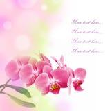Carte romantique avec l'orchidée rose Photo stock