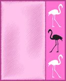 Carte rose de flamant Photographie stock
