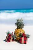 Carte tropicale de vacances, partie pour des vegans Photographie stock libre de droits