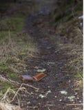 Carteira de couro perdida Fotografia de Stock