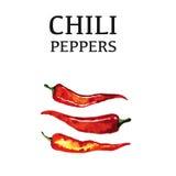 Cartel aislado de la pimienta de chile rojo en blanco Foto de archivo libre de regalías