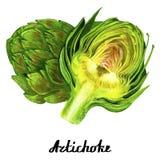 Cartel coloreado de la alcachofa del watercolour fotos de archivo