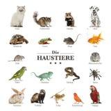 Cartel de animales domésticos en alemán Imágenes de archivo libres de regalías
