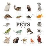 Cartel de animales domésticos en inglés Fotografía de archivo libre de regalías