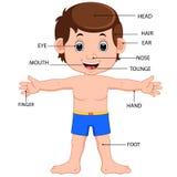 Cartel del diagrama de las partes del cuerpo del muchacho imagen de archivo