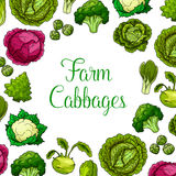 Cartel del vector de las verduras frondosas de la col ilustración del vector