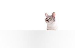 Cartel en blanco del gato Imagen de archivo libre de regalías