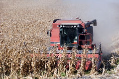 Cartel et maïs Photo stock