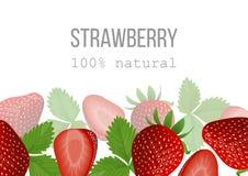 Cartel maduro de la fresa el 100 por ciento de natural bayas en la parte inferior Fotos de archivo libres de regalías