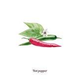 Cartel pintado a mano de la acuarela con el pimiento picante libre illustration