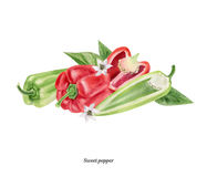 Cartel pintado a mano de la acuarela con paprika roja y verde stock de ilustración