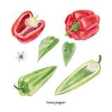 Cartel pintado a mano de la acuarela con paprika roja y verde libre illustration