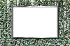 Cartelera en blanco en fondo verde de la textura de la pared de las hojas Imagen de archivo libre de regalías