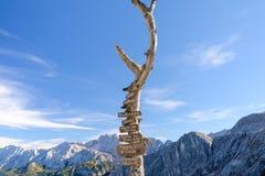 Cartello di legno con le frecce dell'itinerario sull'albero asciutto Immagine Stock