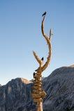 Cartello di legno con le frecce dell'itinerario sull'albero di legno asciutto Fotografie Stock Libere da Diritti