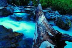 Carter Creek Fotografie Stock Libere da Diritti
