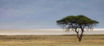Carter de sel d'Etosha Image libre de droits