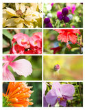 Cartes de conception avec la collection florale Images libres de droits