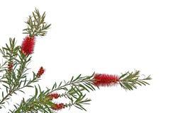 Cartes de voeux avec des fleurs sur un fond blanc Images libres de droits