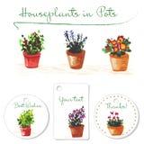 Cartes postales avec des homeplants d'aquarelle dans des pots Illustration tirée par la main Photo libre de droits