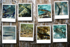 Cartes postales de la mer Image stock