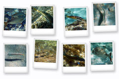 Cartes postales de la mer Photo stock