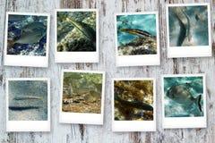 Cartes postales de la mer Images libres de droits