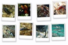 Cartes postales de Polynésie Images stock