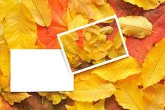 Cartes vierges avec des lames d'automne Image stock