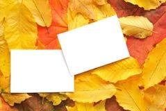 Cartes vierges avec des lames d'automne Images stock