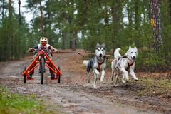 Free Carting Dog Mushing Race Stock Photos - 178885013