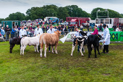 Cartmel Agricultural Show Royalty Free Stock Photo