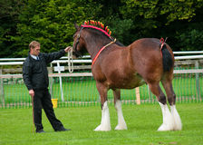 Cartmel Show 2010 Stock Image