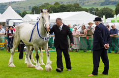 Cartmel Show 2011 heavy horse Royalty Free Stock Images