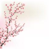 Cartão de florescência de Cherry Blossom Branches Eps 10 Fotos de Stock