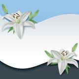 Cartão do cumprimento ou do convite com o lírio da flor 3d Imagens de Stock Royalty Free