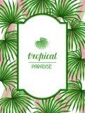 Cartão do paraíso com folhas das palmas Folha tropical da imagem decorativa do Livistona Rotundifolia da palmeira Imagem para o f Fotos de Stock Royalty Free