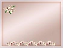 Cartão luxuoso Fotos de Stock Royalty Free