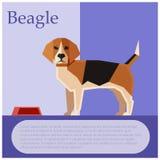 Cartolina colourful del cane da lepre Fotografia Stock