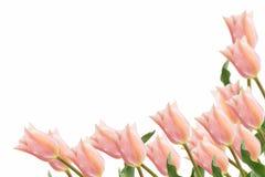 Cartolina con i fiori eleganti Immagini Stock